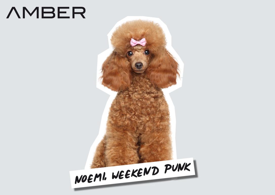 Pinker Pudel Branding Illustration